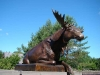 Bronze Reclining Moose